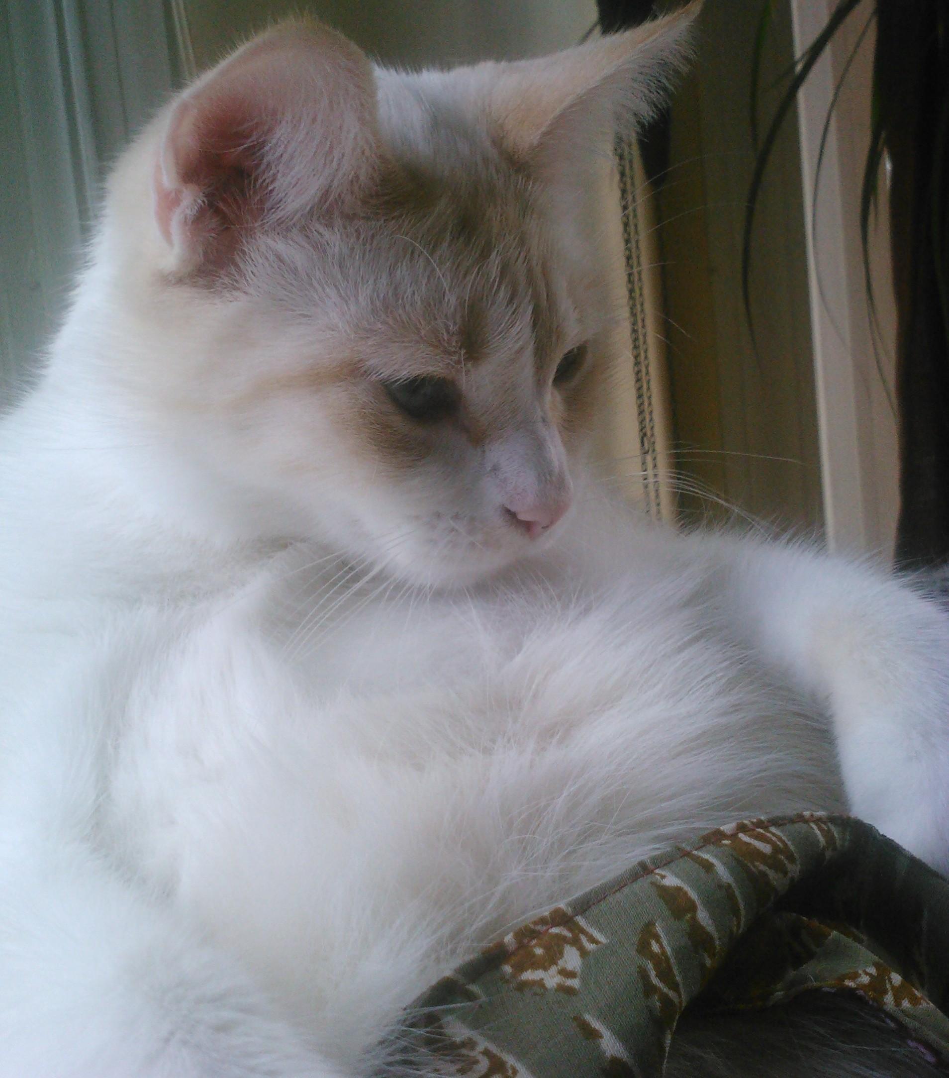 What Is Cat Box Zen Cat Box Zen