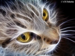 fractal__cat_face__by_lady_valentine_art-d5vsw04