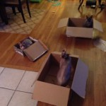 Silly Cats in a box