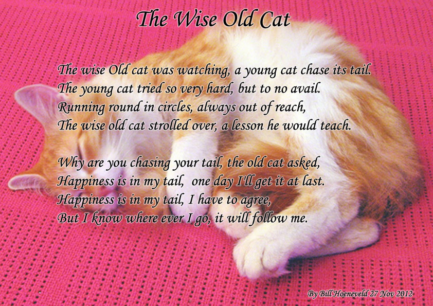 2012112782546_the-wise-old-cat