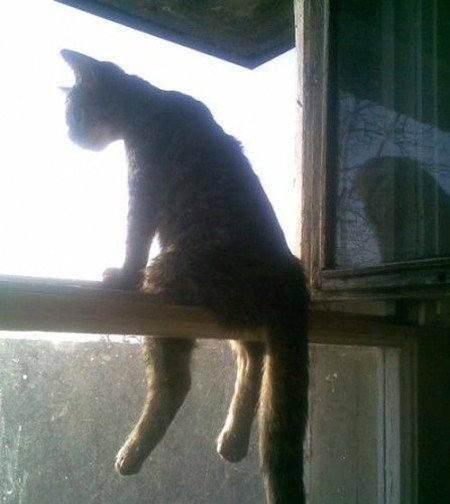 http://www.catboxzen.com/wp-content/uploads/2014/07/cat-hanging-out.jpg