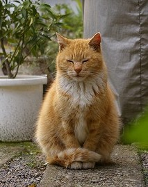 mindfulness-cat