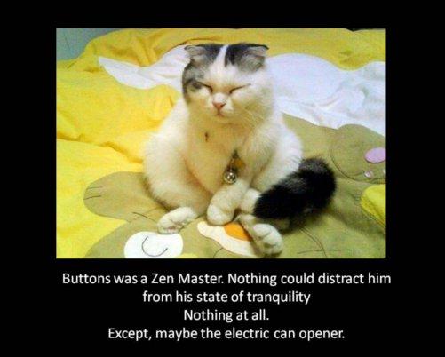 zen-master-cat