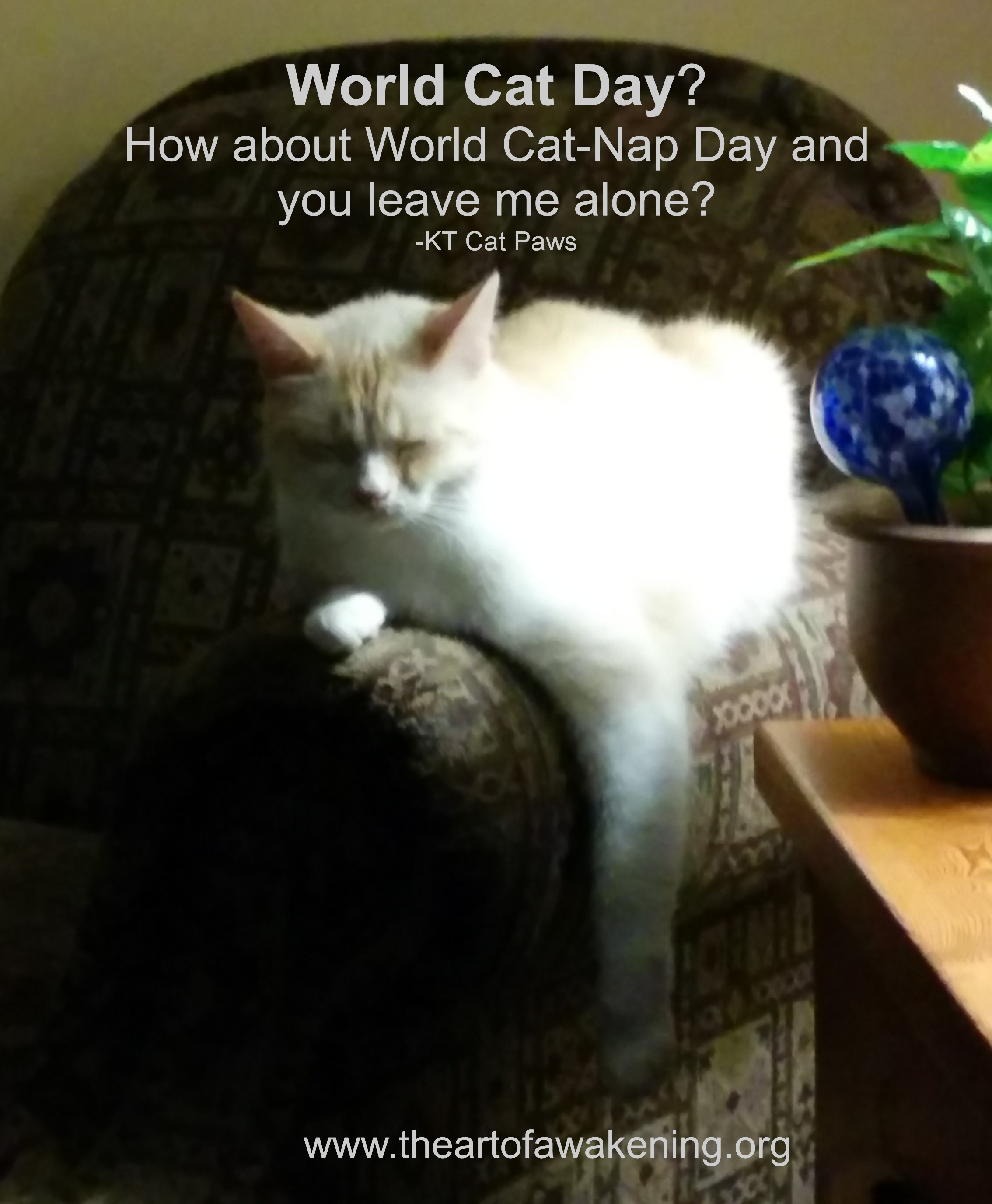 world cat day cat box zen. Black Bedroom Furniture Sets. Home Design Ideas