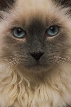 wise_cat