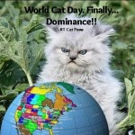 World Cat Day!