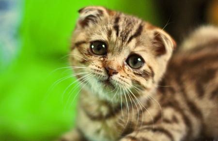 I am a sad cat