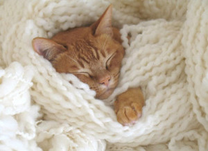 save and cozy...