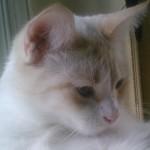 Image of a Zen Cat