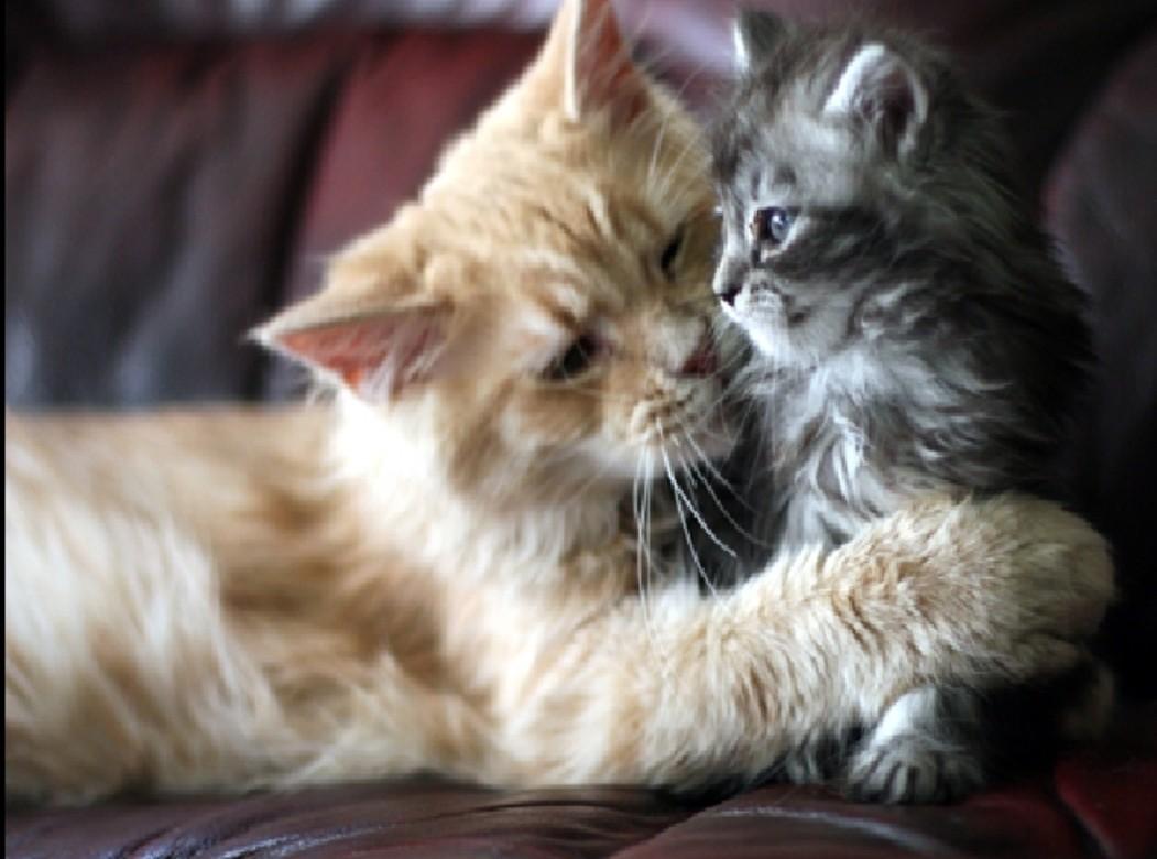 Pawsome Video Cat Hugging Dog