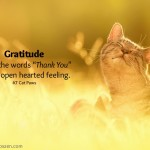 How to find gratitude, the easy way