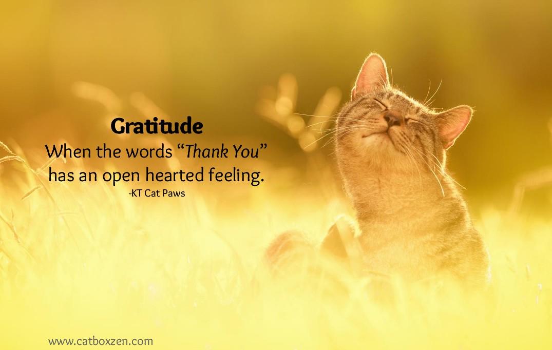 Gratitude Happy Cat Cat Box Zen