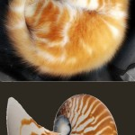 The wisdom of the nautilus shell