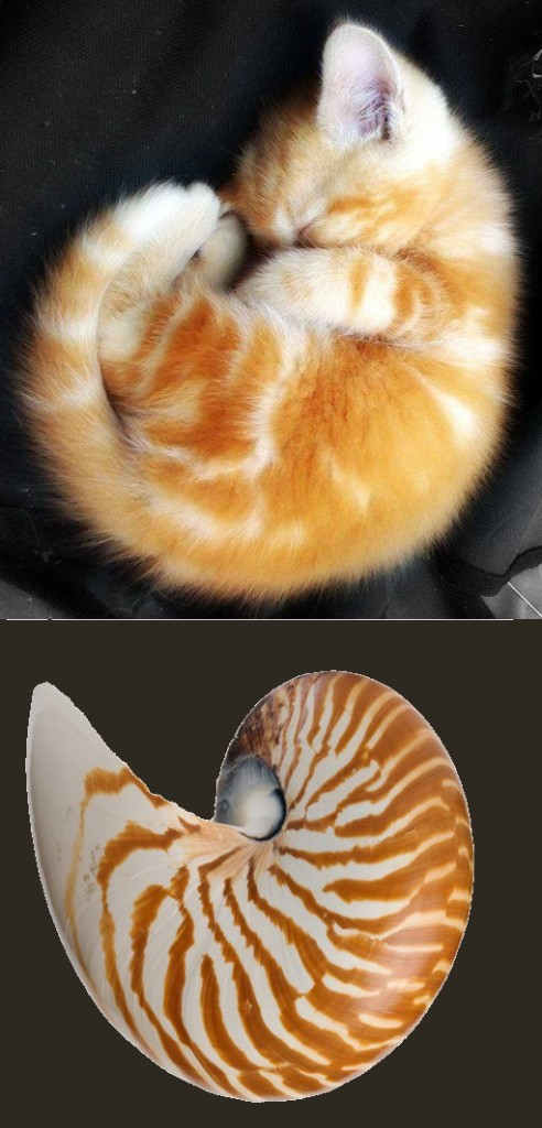 The Wisdom Of The Nautilus Shell Cat Box Zen