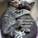 The 10 different types of cat hugs