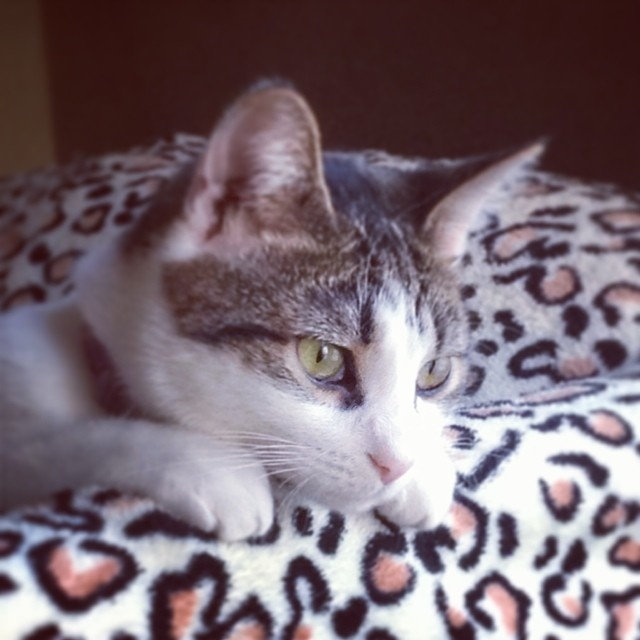 are female cats spayed or neutered