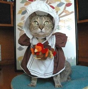 Cat-Female-Pilgrim-Costume & Cat-Female-Pilgrim-Costume - Cat Box Zen