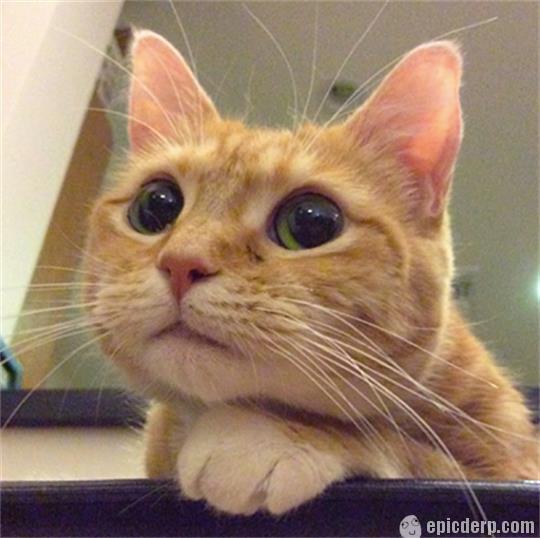 cute-kitty-eyes-begging-for-food.jpg