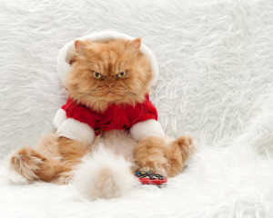 Garfi the cat brings holiday cheer? I am terrified.