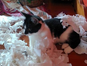 Miss Mattie. The paw-popping, Kill the paper towel cat.