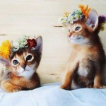 Be a Hippie Cat now!