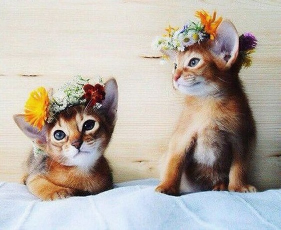 We are rocking Hippie Cats!