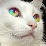 Mr Bailey: skittles cat