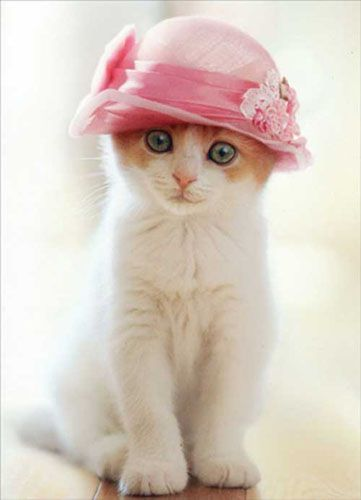 cute kitten with hat